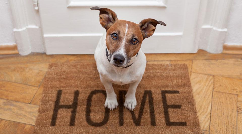 Pet Minding Services